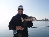 Bay Fishing, On the Fly Fishing Charters, California Shark Fishing, San Diego, CA