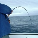 Testimonial, On the Fly Fishing Charters, California Shark Fishing, San Diego, CA