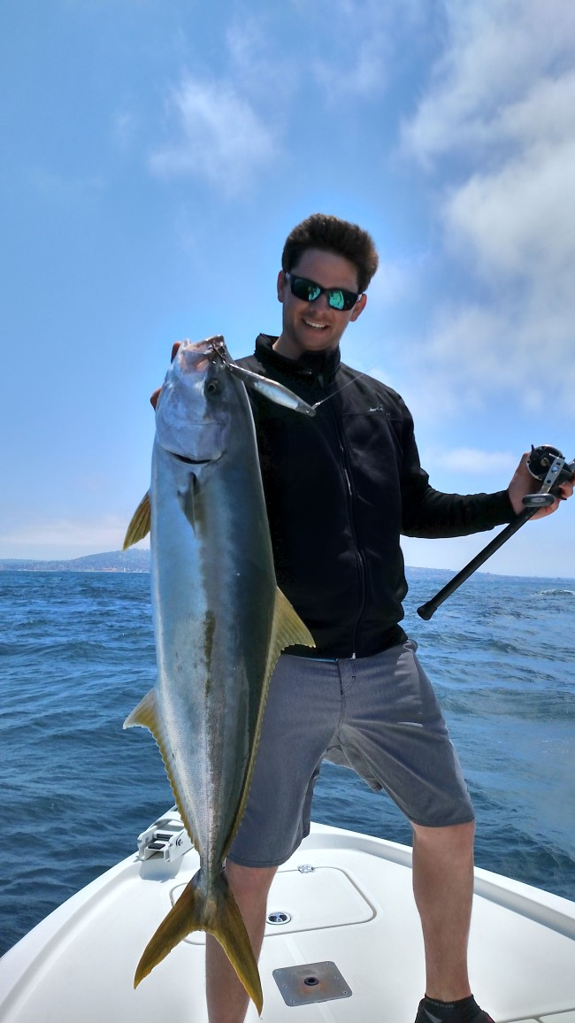 Yellow tail in the chum slick a few times this past week!
