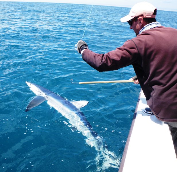Winter Blue Shark Fishing