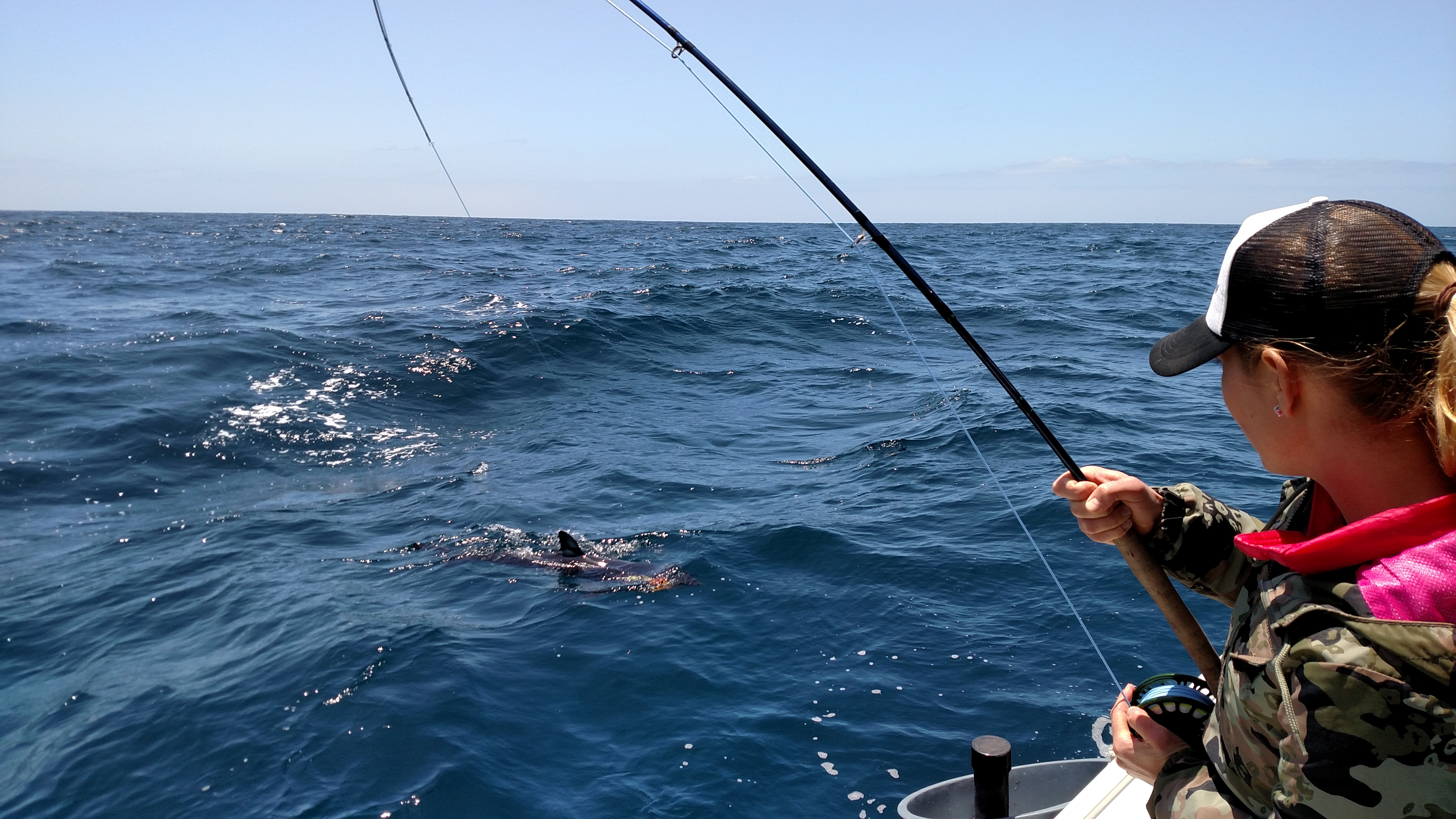 shark fishing is steady on the fly fishing charters