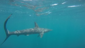 Hammerhead sharks this month!